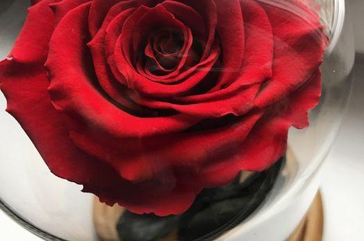 Valentine's Cliché: Unde te Regasesti?